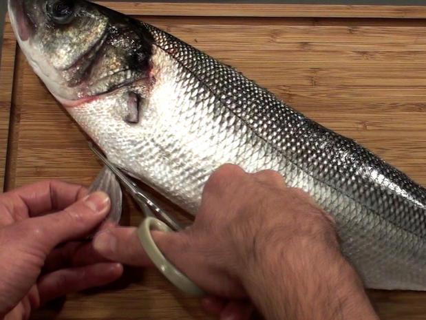 Habiller les poissons ronds (ébarber, écailler, vider)